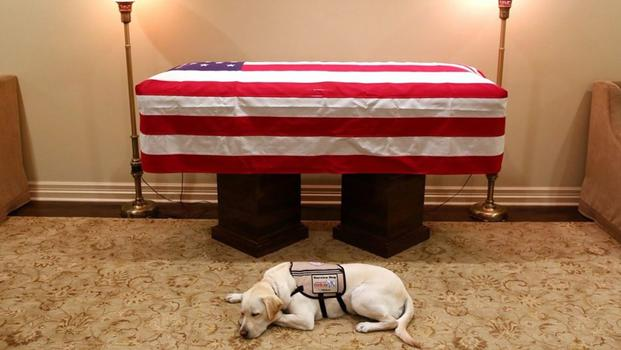 'Mission complete': Bush's service dog lies by casket